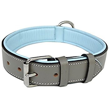 dog collars exporter in up